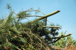 Grünschnitt, Rasen, Wurzeln Entsorgung Container