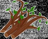 Containerdienst für Baum- und Strauchschnitt (Grünschnitt) online bestellen